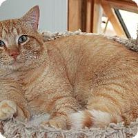 Adopt A Pet :: Tiggy - Red Deer, AB
