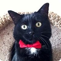Adopt A Pet :: Shandra - Vancouver, BC
