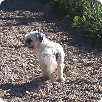 Adopt A Pet :: October - Prole, IA