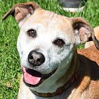 Adopt A Pet :: Phoebe - Huntley, IL