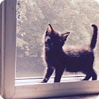 Adopt A Pet :: Athena - Manchester, CT