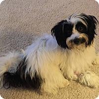Adopt A Pet :: Ollie - Windermere, FL