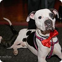 Adopt A Pet :: Spots - Boston, MA