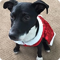 Adopt A Pet :: Daisy Mae - Blaine, MN