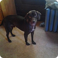 Adopt A Pet :: Stimpy - Upper Sandusky, OH