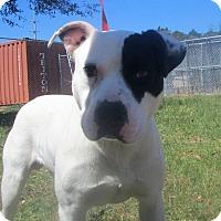 Adopt A Pet :: Patch - Darien, GA