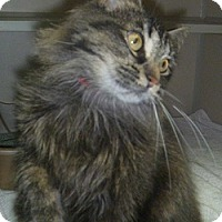 Adopt A Pet :: Mochi - Hamburg, NY