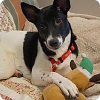 Adopt A Pet :: 'PANDA' - Agoura Hills, CA