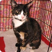 Adopt A Pet :: Mya - Colmar, PA