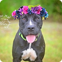 Adopt A Pet :: Moxie - Fort Valley, GA