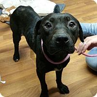 Adopt A Pet :: Olivia - Lisbon, OH