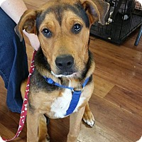 Adopt A Pet :: Hunter - Northport, AL