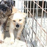 Adopt A Pet :: Zoey - Harmony, Glocester, RI