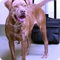 Adopt A Pet :: Shiloh - Goodlettsville, TN