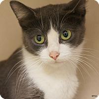 Adopt A Pet :: Delia - East Hartford, CT