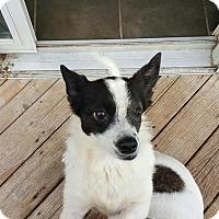 Adopt A Pet :: Ruby - Freeport, NY