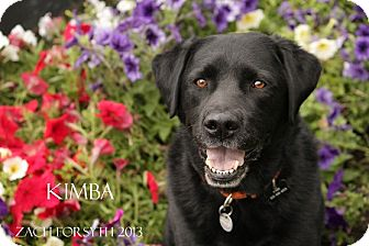 Labrador Retriever Mix Dog for adoption in Portland, Oregon - Kimba