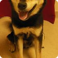 Adopt A Pet :: Rocky - Gary, IN