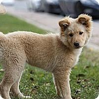 Adopt A Pet :: Jewel - Rigaud, QC