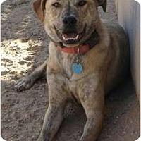 Adopt A Pet :: Pete - Golden Valley, AZ