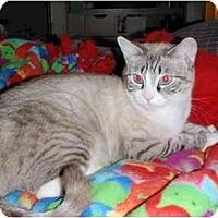 Adopt A Pet :: Sasha - Mesa, AZ