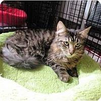Adopt A Pet :: Trevor - Irvine, CA
