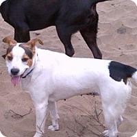 Adopt A Pet :: Mattie - foster/adopt - San Francisco, CA