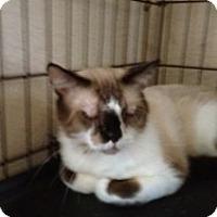 Adopt A Pet :: Koko - Fort Lauderdale, FL