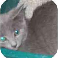 Adopt A Pet :: Bridgette - Lombard, IL