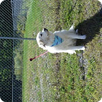 Adopt A Pet :: Magnum - Lee, MA