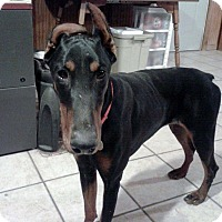 Adopt A Pet :: Annie--pending - New Richmond, OH