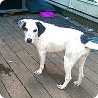 Adopt A Pet :: Hailey - Charlestown, RI