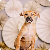 Adopt A Pet :: Miles - Portland, OR