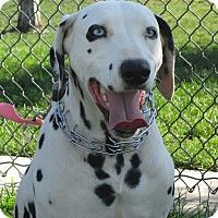 Adopt A Pet :: Zoey - Turlock, CA