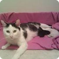 Adopt A Pet :: Qtip - Duluth, GA