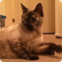 Adopt A Pet :: Ava - Gainesville, FL