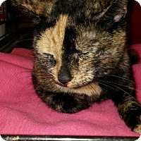 Adopt A Pet :: Teresa - Warrenton, MO