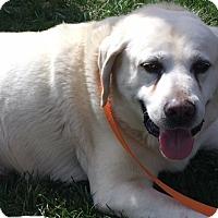 Adopt A Pet :: Senna - Charleston, SC