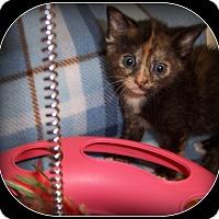Adopt A Pet :: Jelly Bean - South Plainfield, NJ
