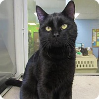 Adopt A Pet :: Ferguson - Northfield, MN