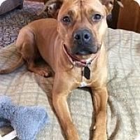 Adopt A Pet :: GIA - Albany, NY