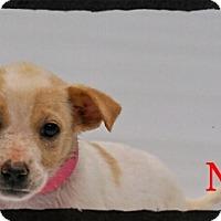 Adopt A Pet :: Nella - Old Saybrook, CT