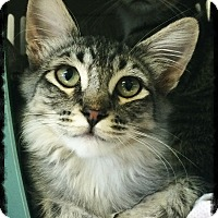Adopt A Pet :: Katani - Los Alamitos, CA