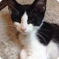 Adopt A Pet :: Crisper - North Highlands, CA