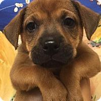 Adopt A Pet :: Patti - Ft. Lauderdale, FL