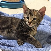 Adopt A Pet :: Amelia Bedelia - Oviedo, FL