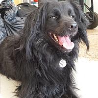 Adopt A Pet :: KoKo - Scottsdale, AZ