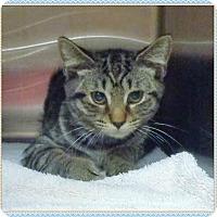 Adopt A Pet :: NICK - Marietta, GA
