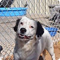 Adopt A Pet :: Mitzi - Sierra Vista, AZ