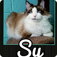 Adopt A Pet :: Sy - Edwards AFB, CA